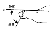 足の母指の屈曲(IP)/伸展(IP)の参考図