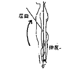 肘の屈曲/伸展の参考図