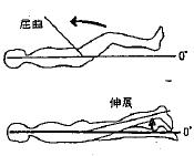 股の屈曲/伸展の参考図