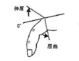 指の屈曲(MCP)/伸展(MCP)の参考図